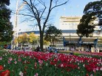 花盛りの横浜でバレエの発表会 - 光さんの日常