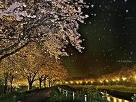 草場川ライトアップ 続き - A  B  C