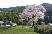 桜巡り・みずめの桜 - 暮らしの中で