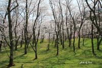 400年の森 - 晴れ時々そよ風