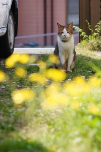 黄色い春 - COMPLEX CAT