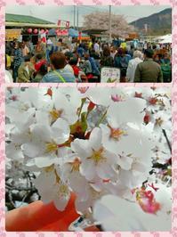 武川 実相寺  桜と水仙のコラボレーション - ピースケさんのお留守ばん