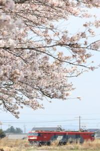 2017【桜】Part3 - EH500_rail-photograph