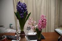 とある日の家庭菜園 - phototelegraph by mw