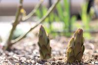 やっと瓦チップ敷き終了(^◇^;) - my small garden~sugar plum~