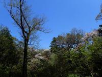 見納めの桜 - TOM'S Photo