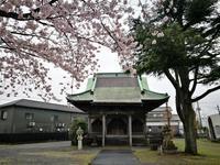 茨城の桜めぐり 薬師堂 @茨城県 - 963-7837