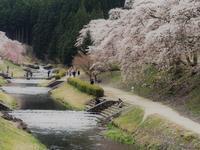 うぐい川 桜祭りの日に - 鹿深の森