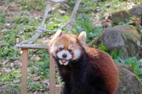 アズキ親子 - 動物園に嵌り中