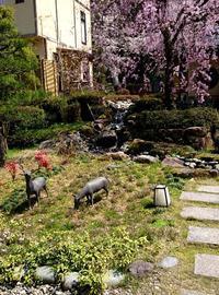 こちらも咲いてきました - 金沢犀川温泉 川端の湯宿「滝亭」BLOG