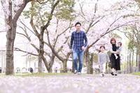 桜と一緒にこの瞬間を* - mama*y-photo