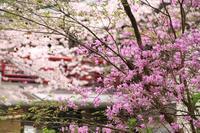 法多山でお花見・3♪ - happy-cafe*vol.2