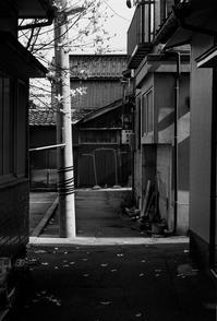 路地裏の木蓮 - Picture In A Frame