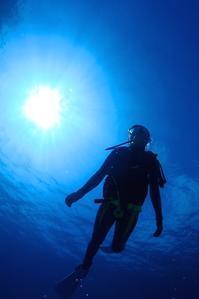 ツバメウオの群れ 奄美大島南部 - 奄美大島 ダイビングライフ    ☆アクアダイブコホロ☆