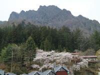 樹齢200年のしだれ桜@妙義神社 - からっ風にのって♪