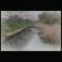 ☆ 春の小川 ☆ - ON ANY SUNDAY 2.............