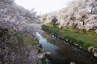 一夜限りのライトアップ直前☆野川の桜 - さんじゃらっと☆blog2