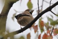 営巣、繁殖、求愛、みんな忙しそうです - 野鳥写真日記 自分用アーカイブズ