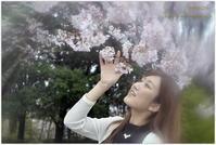 春爛漫 - caetla