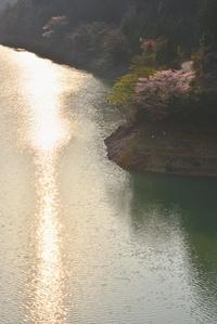 水源地の村の春  川上村 - 峰さんの山あるき