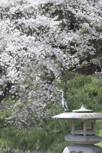 「春を楽しむ」 - hal@kyoto