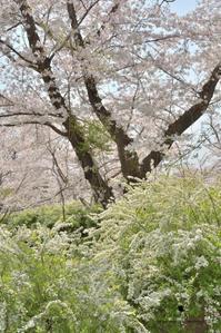 春の海 - お花びより