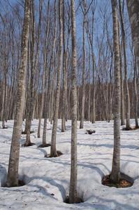 融雪進む - 松之山の四季2
