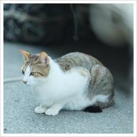 Happy Caturday ** - かめらと一緒*