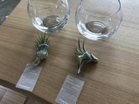 植物増殖 - 続・わやわや日記