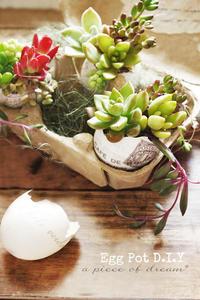 簡単DIY!vol.6.「タマゴの殻で簡単ポット」作り方(多肉を植えてみよう) - a piece of dream* 植物とDIYと。