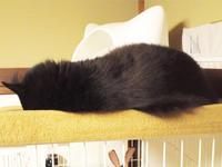 チョコ坊、おさなニャじみタワーも寝♪ - 晴れのちチョコ坊、にゃんぽ日和!