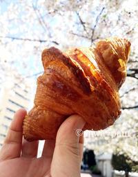 PATHクロと365日くるみで桜ショット - パンある日記(仮)@この世にパンがある限り。