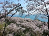 4月後半~GWのご予約可能日 - せらぴすとDiary