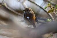 3月に出会った鳥さんたち@まつぶし編 - Buono Buono!