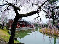 京都へ - 元木はるみのバラとハーブのある暮らし・Salon de Roses