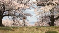 逝く春を惜しみながら。。。。 - EL FLAMINGO エルフラミンゴ  店主のひとりごと