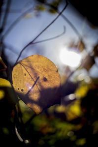 山を歩けば・・・ -6 - Korze Photolog