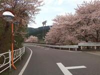 桜ポタ - 自転車を少々