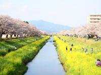 お花見散歩 - **たびびより**