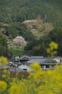 明日香 岡寺展望 - ぶらり記録(写真) 奈良・大阪・・・