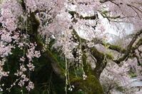 西吉野 性龍寺 - ぶらり記録(写真) 奈良・大阪・・・