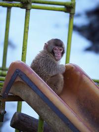 4月16日(日) 手巻き寿司 - ほのぼの動物写真日記