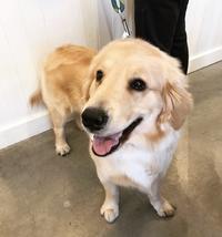 Hello Ally !! - Doggie Do!! / good dog and hello cat !!