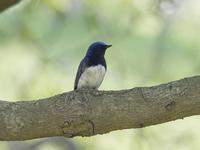 春の青い鳥 4月16日 慣れ - たった一度の出会いから
