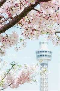 ご近所の桜 - すずちゃんのカメラ!かめら!camera!