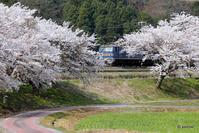 2017/04/14 PFと桜 '17 友情出演EF200・EF510・EF66 - Catching The Train 運転日報