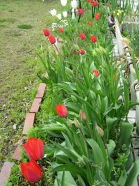 主留守でも花は咲く - 花の自由旋律