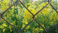 秘密の花園っぽい写真(自称)が撮れました。 - 歌い手菅野千恵のaround me