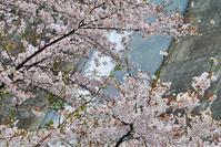 ダムに桜!って・・・似合うな~♪・・・足利市・松田川ダム - 『私のデジタル写真眼』