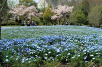 花フェスタを撮る - miyabine's フォト日記2~身の周りのきれい・可愛い・面白い~